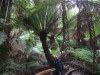 37_australien_great-ocean-road_maits-rest-rainforest-walk