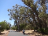 33_australien_forest-bay-road